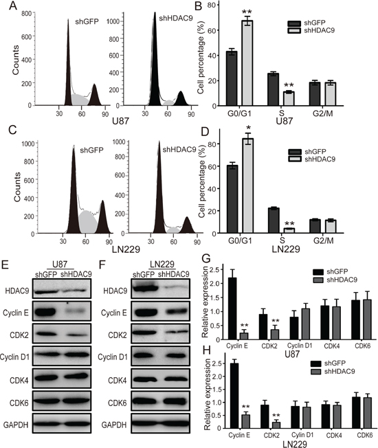 Knockdown of HDAC9 induces cell cycle arrest in G1 phase.