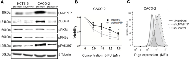 LMWPTP influences cell survival pathways and desensitizes colorectal cancer cells to chemotherapy.