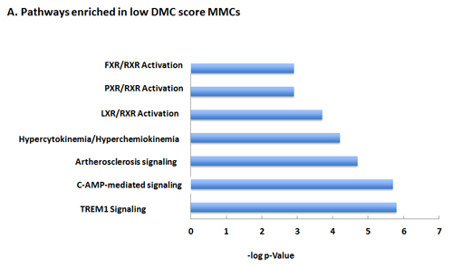 Major Pathways enriched in low (A) or high (B) DMC score MMCs.