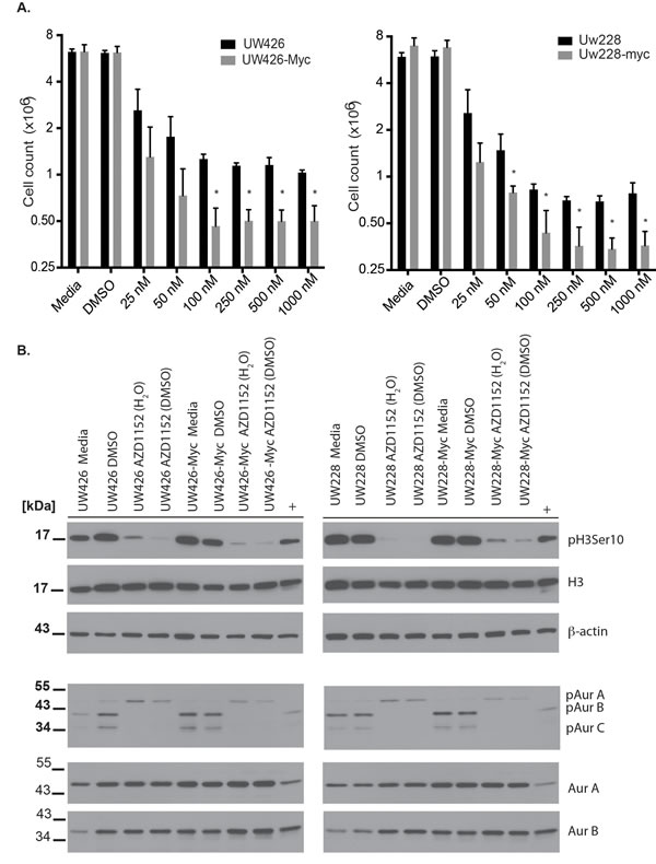 Cell viability effects and specificity of Aurora B inhibition with AZD1152-HQPA in medulloblastoma.