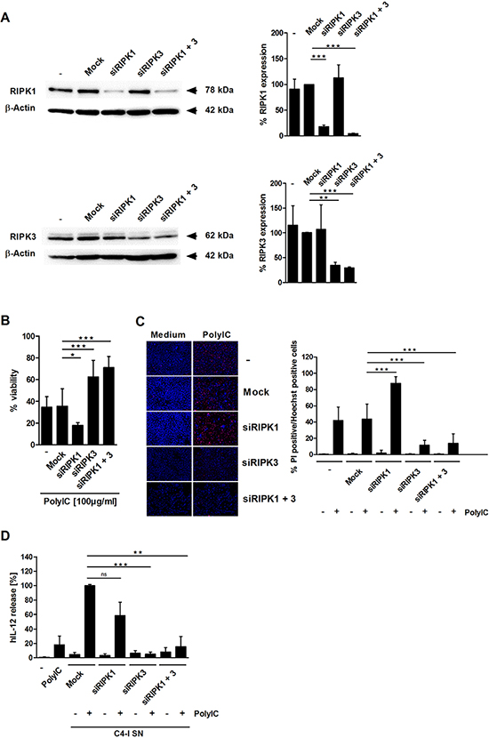 RIPK3 expression is required for PolyIC-induced cell death in C4-I cells.
