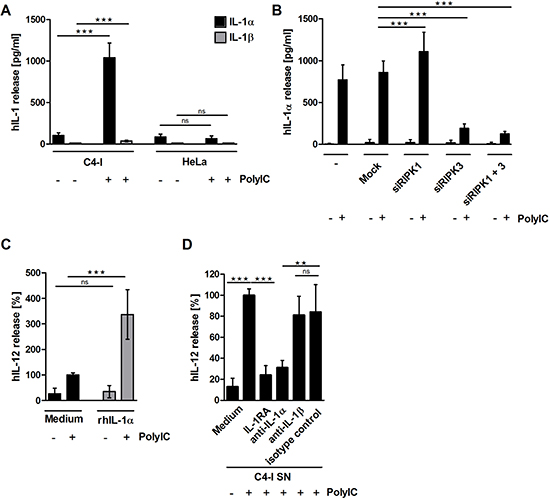 (A) PolyIC-stimulated C4-I cells release IL-1α, but not IL-1β.