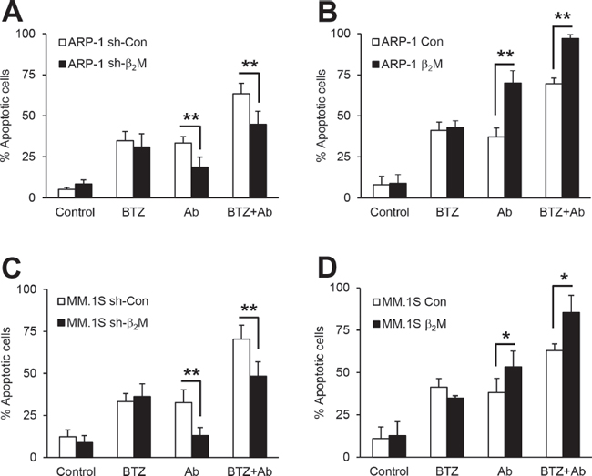 The efficacy of anti-β2M mAbs and BTZ combination treatment in β2M-knockdown and β2M-overexpression MM cells.