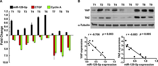 Clinical relevance of miR-129-5p, YAP, TAZ, CTGF and Cyclin A in ovarian cancer.
