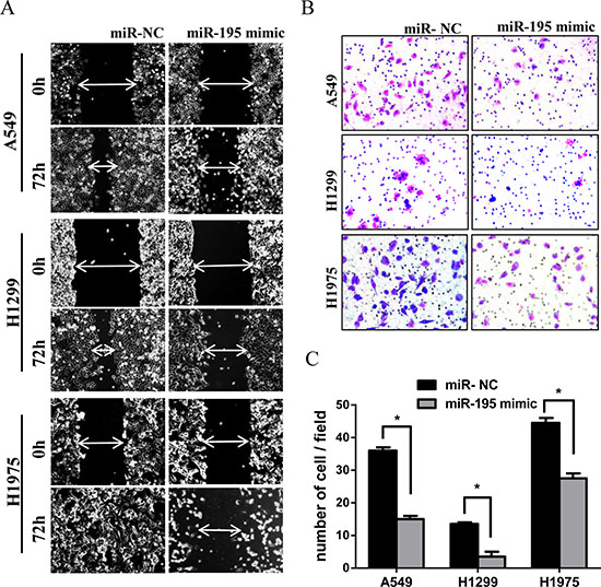 MiR-195 expression and lung cancer cell migration and invasion.
