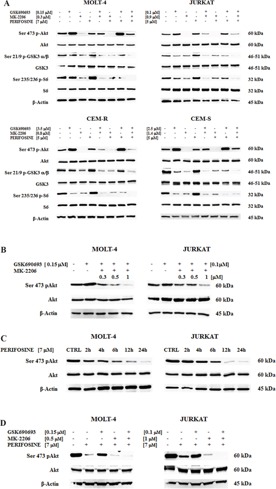 Multiple Akt inhibition affects PI3K/Akt/mTOR pathway and the Akt inhibition is time-dependent.