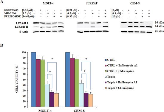 Triple Akt inhibition induces enhanced autophagy.