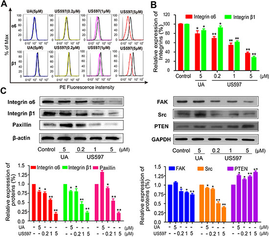 Flow cytometric analysis was performed for integrin α6 and β1 (A) on HepG2 cells, and (B) The inhibitory effect of UA/US597 on the expression of integrin α6 and β1, isotype control (silver area), control (blank curve), blue curve (5 μM UA), yellow, purple and red line represents US597 treated group at concentrations of 0.2, 1 and 5 μM, respectively.