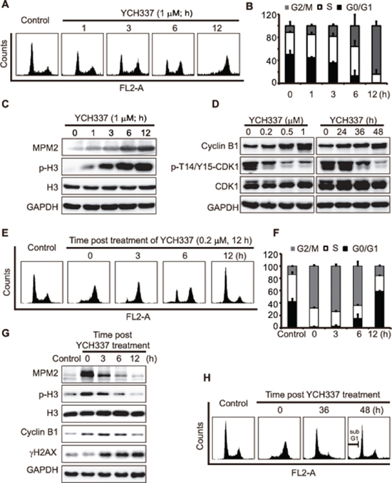 YCH337 induces reversible mitotic arrest but irreversible DNA damage.