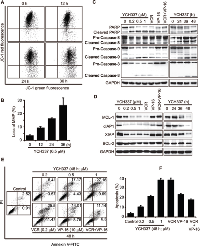 YCH337 induces apoptosis, different from that elicited by the combination of the tubulin inhibitor VCR and the Top2 inhibitor VP-16.
