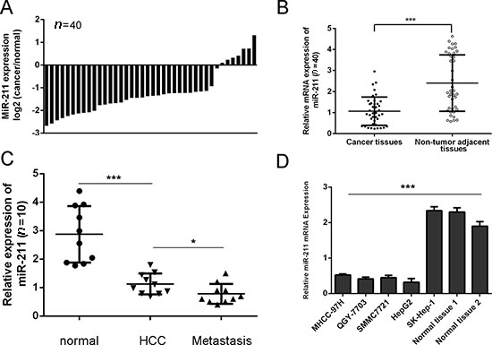miR-211 is downregulated in HCC cell lines and tissues.