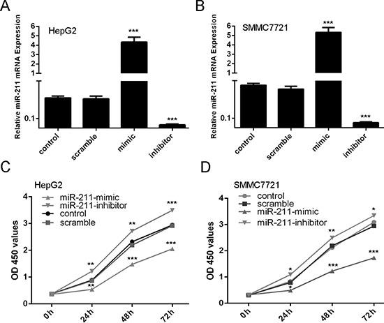 Upregulation of miR-211 inhibits cell proliferation.