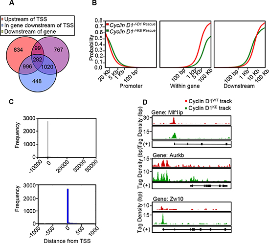 Chip-Seq demonstrates similar characteristics of genomic occupancy for cyclin D1KE and cyclin D1WT.