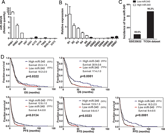 Expression of miR-340 is downregulated in glioma and related with survival of glioma patients.