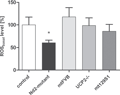 ROS levels of four different conplastic mouse strains and uncoupling protein 2-knockout strain.