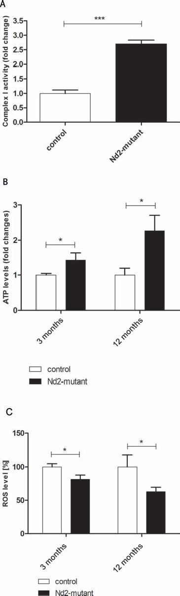 Baseline characteristics of mitochondrial capacity of dermal fibroblasts of conplastic mouse strains.