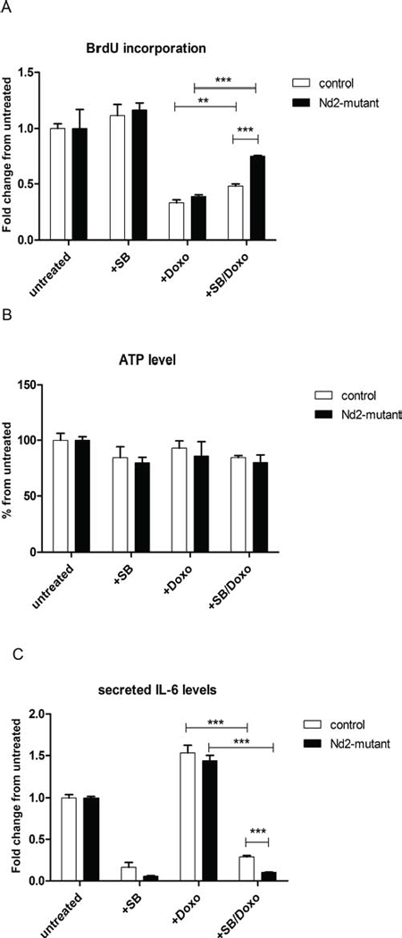 Influence of p38MAPK inhibition on expression of senescence markers in Nd2-mutant mouse fibroblasts.