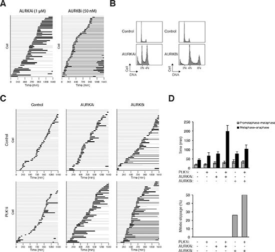 PLK1i cooperates with Aurora kinase inhibitors to induce mitotic arrest and slippage.