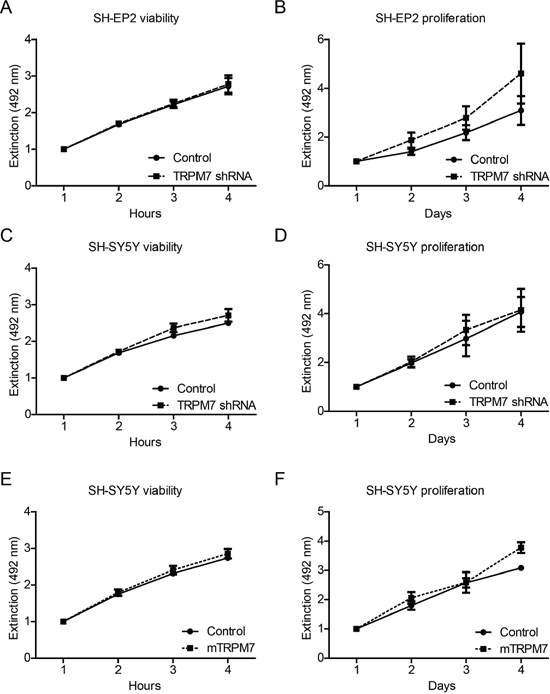 Manipulation of TRPM7 expression does not affect neuroblastoma cell viability and proliferation.
