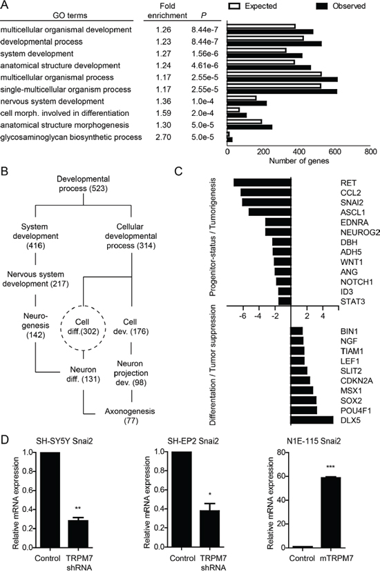 TRPM7 controls progenitor-like features of neuroblastic neuroblastoma cells at the gene expression level.