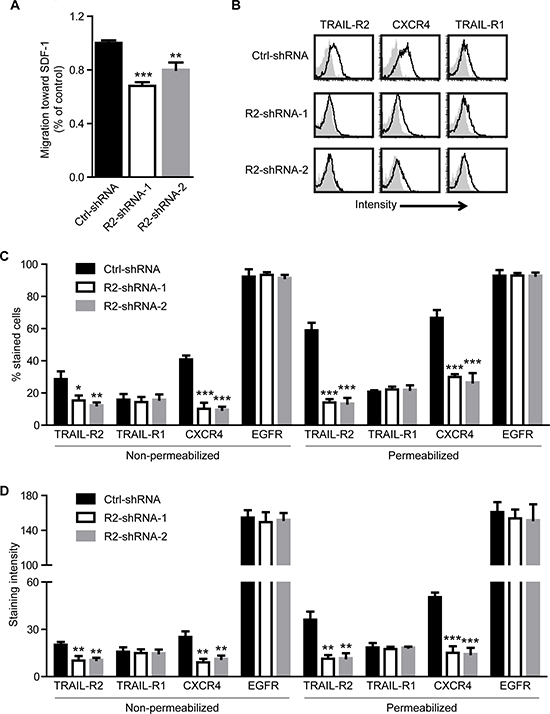 Knockdown of TRAIL-R2 in MDA-MB-231-BO cells downregulates the expression of CXCR4 and inhibits migration towards SDF-1.