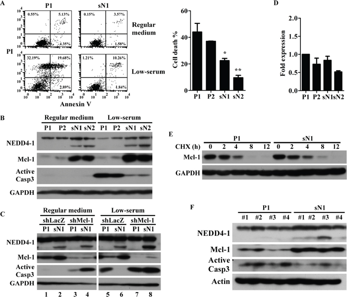 sNEDD4 upregulates Mcl-1 to overcome nutrient deficiency-induced apoptosis.