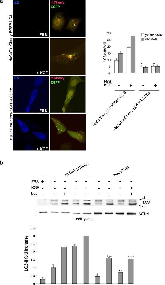 16E5 inhibits autophagosome assembly.