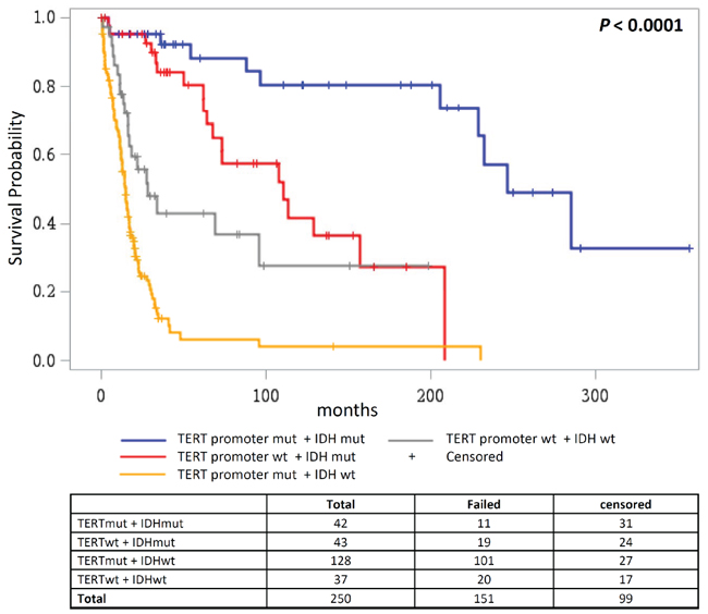 Overall survival according to combined status of TERT promoter and IDH mutations.