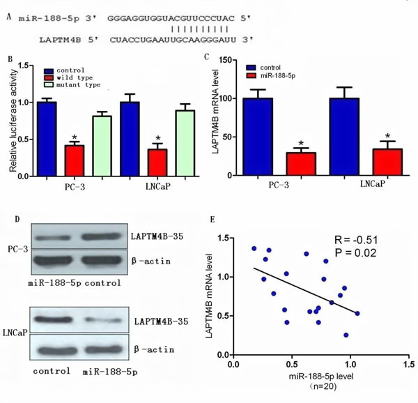 LAPTM4B is a direct target of miR-188-5p in PCa.