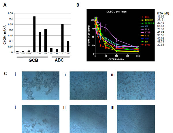 Effects of BTK140 on proliferation and the growth patterns of DLBCL cells.
