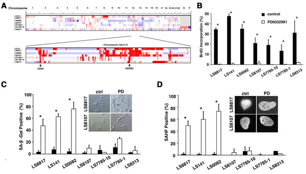 Inhibition of CDK4 triggers either senescence or quiescence in WD/DDLS.