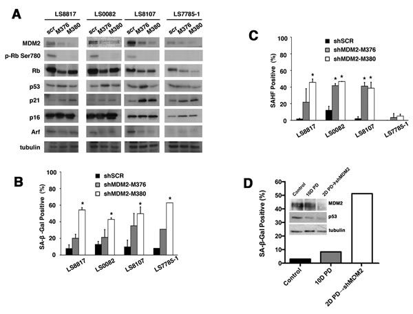 Loss of MDM2 can trigger senescence in WD/DDLS.