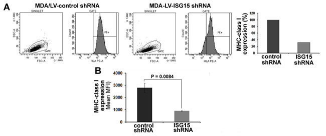 MHC class I surface expression is increased in ISG15 overexpressing breast cancer cells.