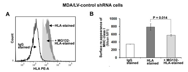 MHC class I surface expression is dependent on the function of 26S proteasome in ISG15 overexpressing breast cancer cells.