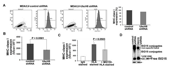 Free ISG15 and not ISGylation contributes to increased MHC class I surface expression in breast cancer cells.