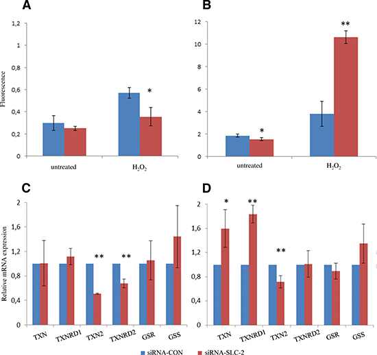 ROS and relevant genes expression level changes in SLC25A10 knockdown A549 cells.