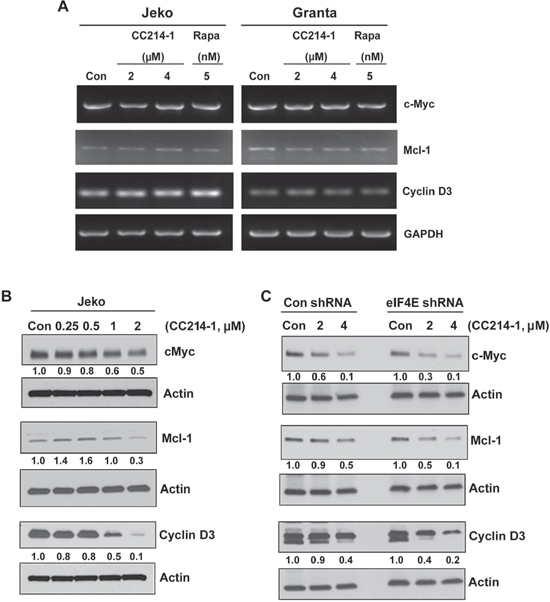 Effect of mTORC1/mTORC2 inhibitor CC214-1 on expression of eIF4E sensitive mRNAs.