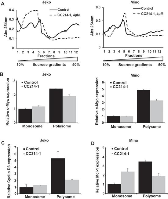 Effect of CC214-1 on polysomal RNA.