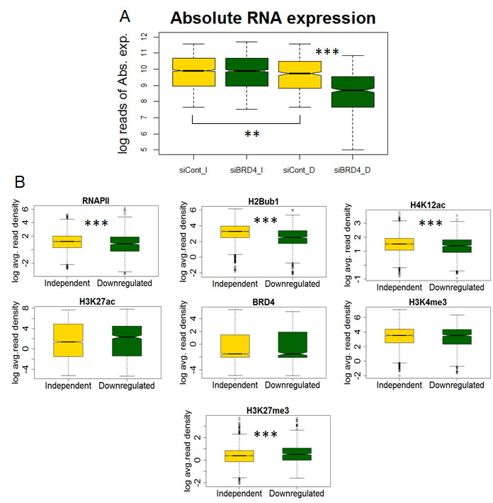 H4K12ac correlates with BRD4 function in regulating gene expression.