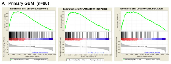 Presence of gene sets related to biological processes analyzed by GSEA.