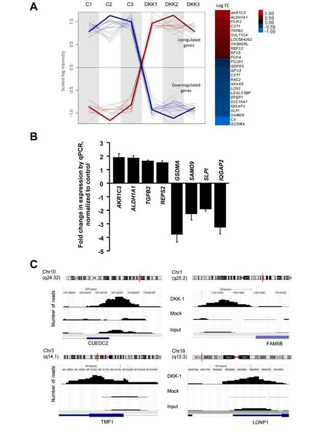 Effects of DKK-1 induction on gene expression in DLD-1 cells.