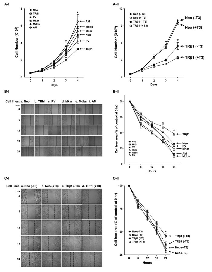 Comparison of rates in cell growth and migration of Neo control cells and MDA-TRβ1, MDA-PV, MDA-Mkar, MDA-Mdbs, and MDA-AM cells.