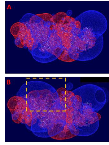 Electrostatic potentials profile of the kinase domains of EGFR dimer.