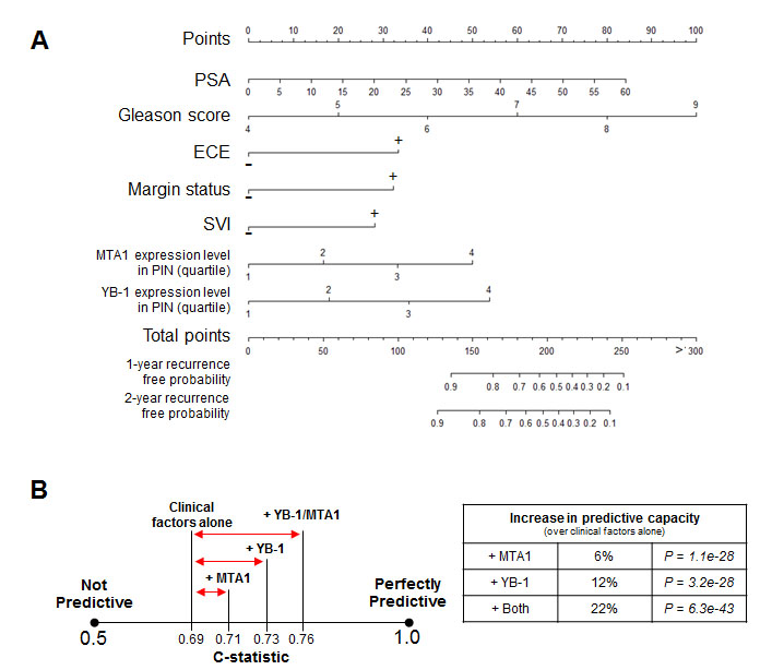 The addition of the MTA1 and YB-1 biomarkers to clinical factors including the Gleason score can improve upon the predictive capacity of a clinical nomogram to forecast PSA progression after radical prostatectomy.