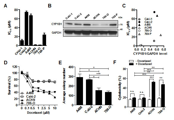 CYP1B1 expression is involved in the docetaxel resistance of RCC cells.
