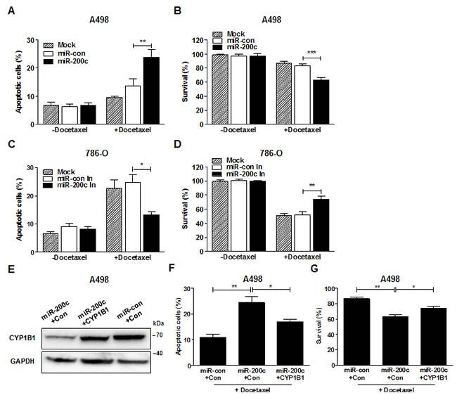 MiR-200c regulates docetaxel resistance of RCC cells.