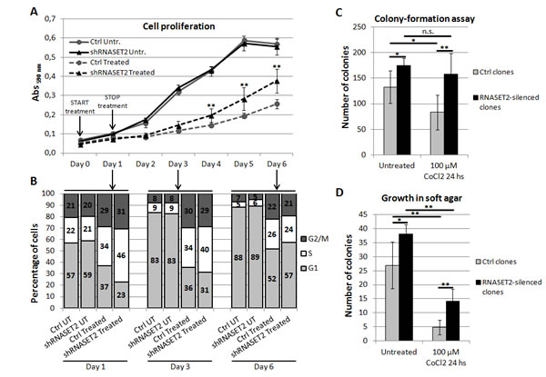RNASET2 affects several cancer-related parameters in OVCAR3 cells following chemically-induced hypoxia.
