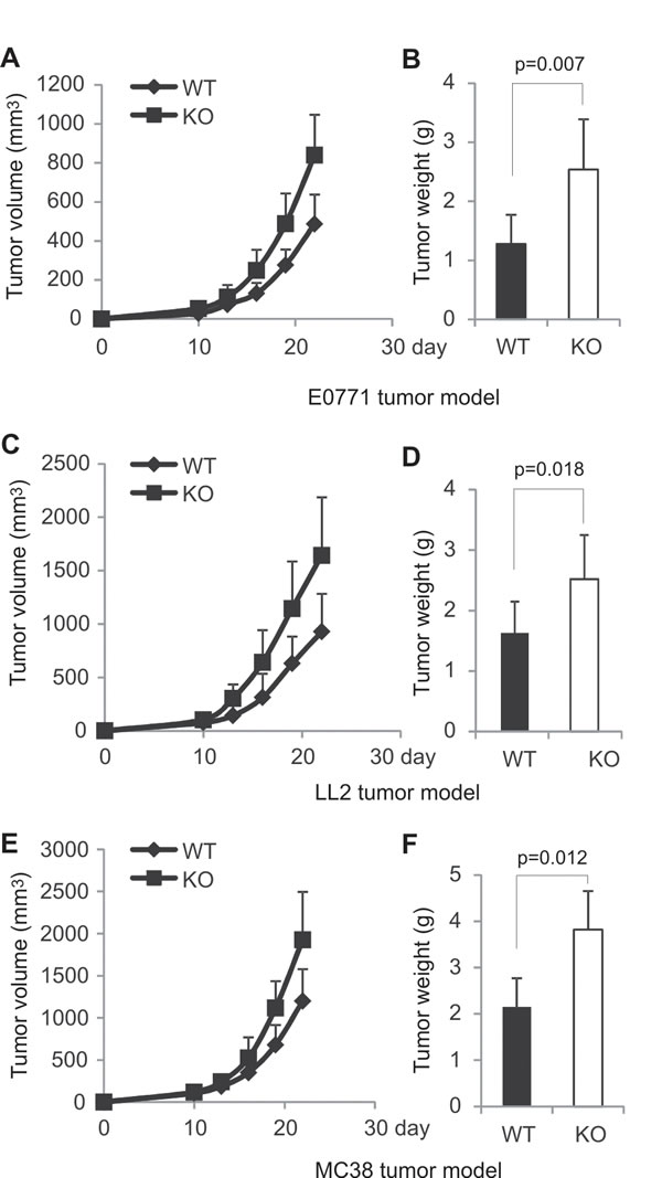 AMPK deficiency in T cells promotes tumor growth in mice.