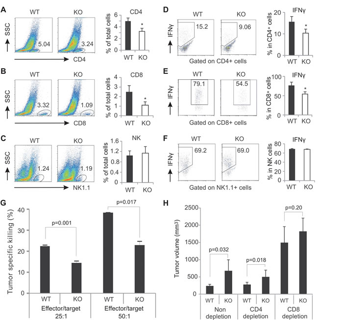 AMPK deficiency decreases T cell presence and function in the tumor stroma.