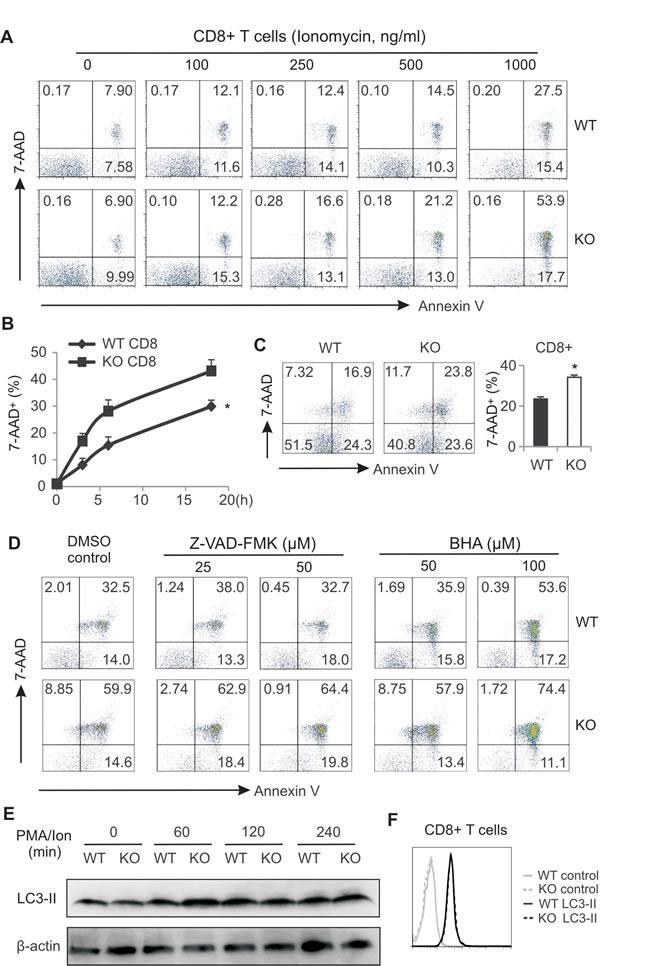 AMPK deficiency promotes CD8